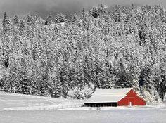 A Red Beauty by ~LASKANWLF on deviantART