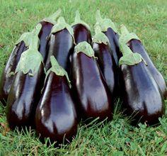 Florida High Bush Eggplants