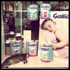 Kitty in a pharmacy windows