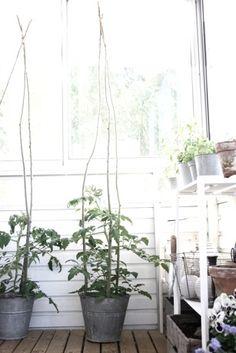 Next summer: tomatoes in the bucket? #balkon #balcony #inspiratie_klein_balkon   balkonafscheiding.nl