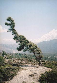 tree shaped like dinosaur