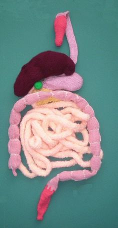 knitted digestive system #craft #health #kids #education