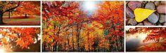 przepiękne krajobrazy jesieni! / Beautiful Autumn landscapes #tapetynapulpit #wallpapers
