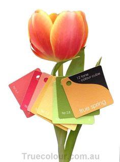 12-Tone Colour Cube True Spring