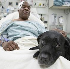 Man and Guide Dog Fall in NYC Subway