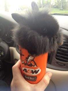 Cute bunny in a cup! http://www.letssmiletoday.com/pictures/10901-bunny-in-a-cup