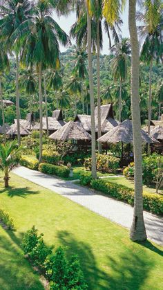 Palms surround the thatch roofed bungalows #Thailand