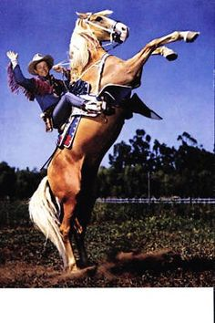 """Starting from Roy Rogers' very first leading role in """"Under Western Stars"""" Trigger appeared in all of Roy's movies, 88 movies total by Roy's count. Trigger also appeared with Roy in all 100 episodes (some sources say 104) of The Roy Rogers Show on television, which aired on NBC from 1951 - 1957."""