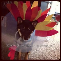 Turkey Dog Costume: Recovering Puppies Can Be Festive Too!... Coolest Halloween Costume Contest