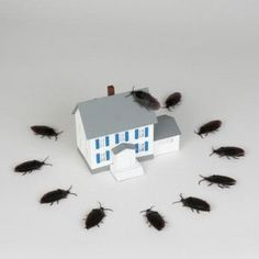 Natural Ways of Getting Rid of Roaches