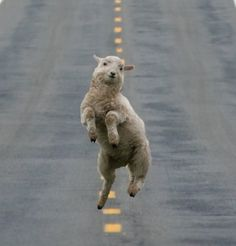 Sheep happens.  :) Jamin man!