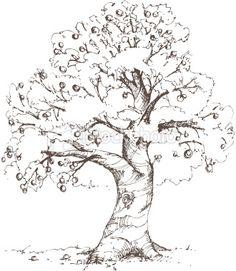 Apple Tree Sketch