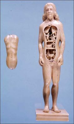 Anatomical manikin 3    France, Germany and Italy, ca. 1500-1700. Carved ivory    Image Courtesy of the Alabama Museum of the Health Sciences, The University of Alabama at Birmingham    These manikins, between 6 to 7 inches in length, were made from solid pieces of ivory. The arms were carved separately and are moveable. The thoracic and abdominal walls can be removed, revealing the viscera. In some manikins the internal organs are carved in the original block and are not removable, while the...