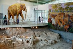 Mammoths roamed Waco