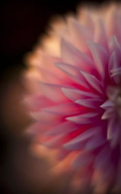 peaceful eye flower macro, dahlia beauti, color, flowers garden