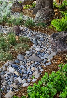 river rock dry creek swale | Embracing the Corner - San Jose//I could move some of the larger rocks from our dry creek bed to the front and replace w/river rock