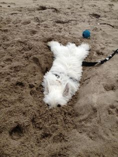 I love the sand! I love it's ooshy gooshiness and how it feels not only between my toes but also on my nose!