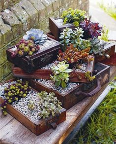 tiny gardens, vintage suitcases, old drawers, old dressers, plants