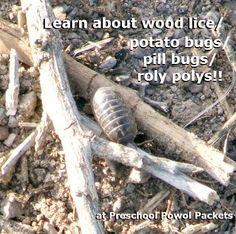 Backyard Bugs: Roly Poly or Potato Bug or Pill Bug or Wood Lice... | Preschool Powol Packets