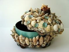 Shell Box / Limpets & other shells