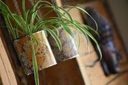 Tin can planters: decorate these with children's artwork. Keep plants in own container.