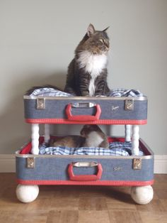 Lovable Luggage Pet Bunk Bed Upcycled Suitcases by SalvageShack