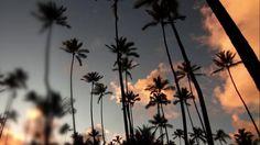 A SUNSET for Two by #GoHawaii. The Island of #Kauai, #Hawaii