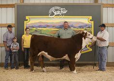 Cattle Show 2012 | Eastern Idaho State Fair