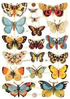 Planche de papillons