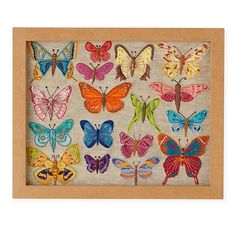 Natural History Framed Wall Art (Butterflies)