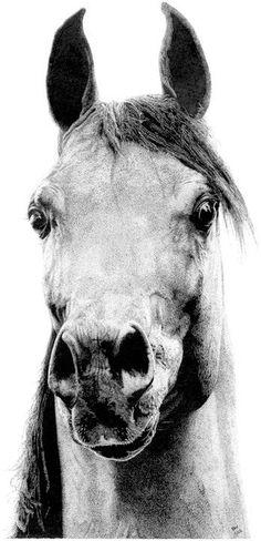 #Arabians #Art