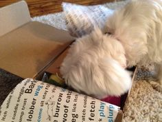 BarkBox Baby dives in to see what came in the mail! #BarkBoxGifts
