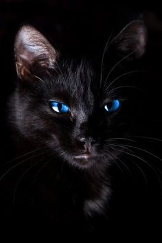 black cat, blue eyes