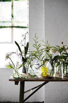 Plant plant, glass, fresh flowers, garden