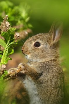Sweet Little Bunny, posted via newwonderfulphotos.blogspot.com