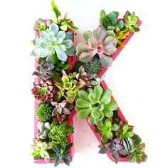 DIY Succulent planter box. #crafts #PINK #PLANTS
