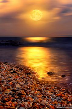 ~~Full moon rising over Ocean reef park on Singer Island Florida by HDRcustoms~~