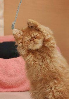 Super kittie......zzzzzzzzz