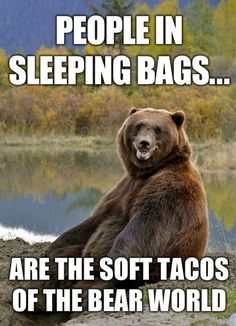 bear, funny, humor, meme