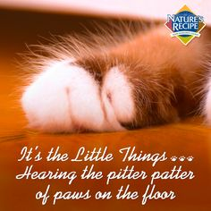 It's the little things: When you hear the little pitter patter of paws on the floor. #cat #pet #quote