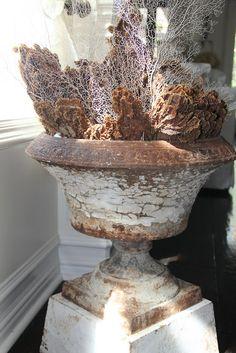 An Antique Urn, Sea Fans & Sea Sponges