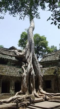 Ta Prohm (Temple of the Jungle) at Angkor Wat National Park, Cambodia