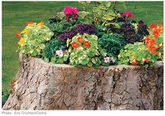 Stump Gardening: How to turn tree stumps into planters.  I think this would be cool since there is a stump right in front of the shed.  in a perfect spot.