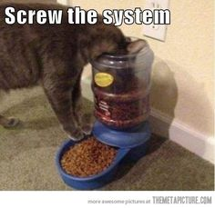 Cats. They only do things their way.