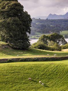 Lake District,Near Sawrey, Lake District, Cumbria, England, UK.