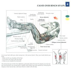 Calfs over bench sit-ups