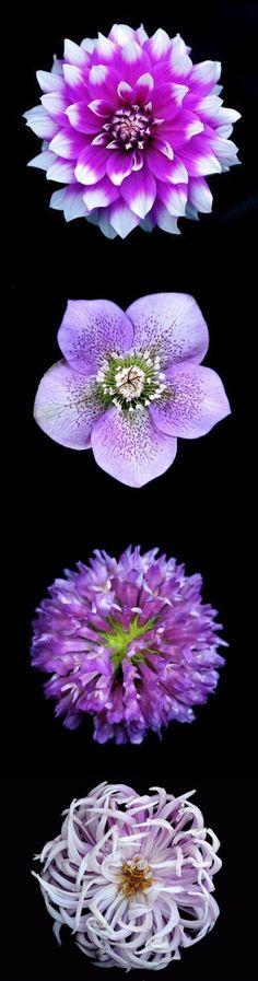 flower art, flower power, floweri flower