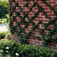 This brilliant kit lets you create a trellis in any shape that you want. | 41 Cheap And Easy Backyard DIYs You Must Do This Summer