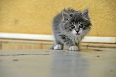 cute kitten with tongue out