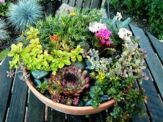 succulent centerpiece.